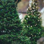 christmas-tree-1149919_960_720-1