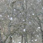 snowfall-16318_960_720